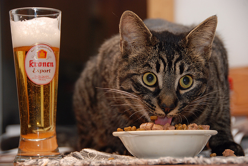 Fat Cat speak fast, eat fast, drink too ... fast